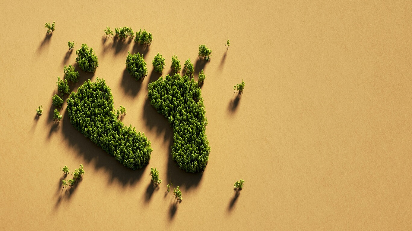 Green footprint made from trees